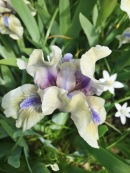 Ornamental Gardens Ottawa - Iris Garden