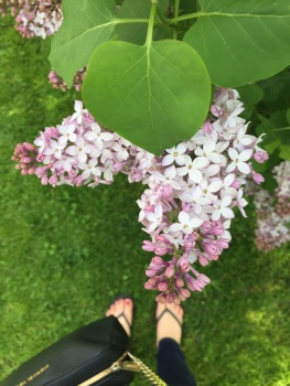 Ornamental Gardens Ottawa - Lilac Season